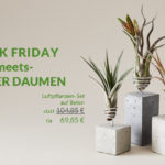 Pflanz dich glücklich und nutze die Chance auf bis zu 50% Rabatt bei EVRGREEN.de